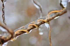 Achtergrond van het de winter de Ijskoude Weer - Krul van Vorst stock afbeeldingen