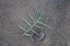 Achtergrond van het het gras de donkere bruine zand van de ontwerpsamenstelling Royalty-vrije Stock Foto
