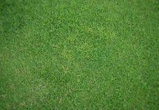 Achtergrond van het keurige groene gras Stock Afbeeldingen