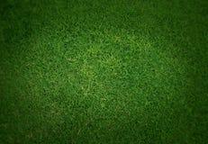 Achtergrond van het keurige groene gras Royalty-vrije Stock Fotografie