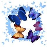 Achtergrond van het kleurrijke vlinders vliegen Stock Afbeeldingen