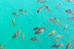 Achtergrond van het vissen de Onderwater Dierlijke Huisdier Stock Afbeeldingen