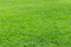 Achtergrond van het zonlicht de verse natuurlijke gras Stock Afbeelding