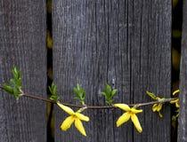 Achtergrond van houten bloemen Royalty-vrije Stock Fotografie