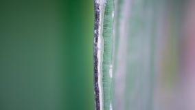 Achtergrond van ijskegels royalty-vrije stock foto