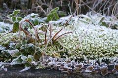 Achtergrond van ijzig gras royalty-vrije stock foto