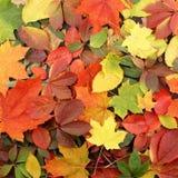 Achtergrond van kleurrijke de herfstbladeren Royalty-vrije Stock Afbeeldingen