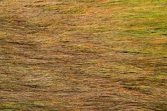 Achtergrond van lange natte gele grastextuur Stock Fotografie