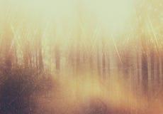Achtergrond van licht onder bomen is gebarsten die het beeld is retro gefiltreerde instagram stijl Stock Foto