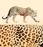 Achtergrond van luipaard royalty-vrije illustratie