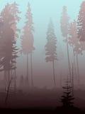 Achtergrond van mist in naaldbos. Stock Afbeeldingen