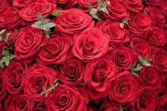 Achtergrond van mooie rode rozen met groene bladeren Stock Foto