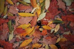 Achtergrond van multicolored bladeren op water stock foto