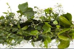 Achtergrond van natte klimopbladeren en witte bloemen op spiegel royalty-vrije stock foto