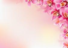 Achtergrond van orchideeën Stock Afbeelding