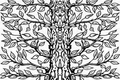 Achtergrond van oude boom Zwarte boom witte achtergrond Vector illustratie Stock Fotografie