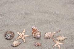 Achtergrond van overzeese shells en zeester op het zand Royalty-vrije Stock Afbeelding