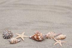 Achtergrond van overzeese shells op het zand Royalty-vrije Stock Afbeelding