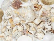 Achtergrond van overzeese shells wordt gemaakt die royalty-vrije stock afbeelding