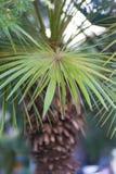 Achtergrond van palmbladen in de zomer stock fotografie