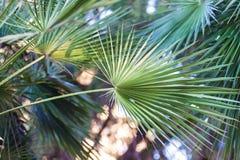 Achtergrond van palmbladen in de zomer stock foto