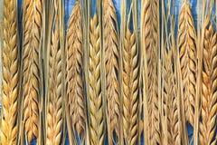 Achtergrond van rijen van rijpe gele oren van tarwe op een blauwe lijst stock foto's