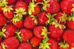 Achtergrond van rijpe organische landbouwbedrijfaardbeien Royalty-vrije Stock Foto
