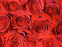 Achtergrond van rode rozen Royalty-vrije Stock Foto's