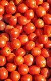 Achtergrond van rode tomaten Stock Afbeeldingen
