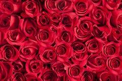 Achtergrond van rozen Royalty-vrije Stock Foto's