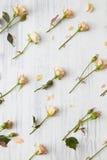 Achtergrond van rozen Royalty-vrije Stock Foto
