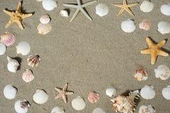 Achtergrond van shell en zeesterren Stock Foto
