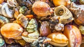 Achtergrond van shells Stock Foto