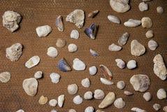 Achtergrond van shells wordt gemaakt die Royalty-vrije Stock Fotografie