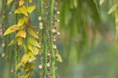 Achtergrond van stammen, naalden, bladeren en cactusbloemen royalty-vrije stock foto's