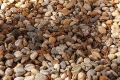 Achtergrond van stenen De stenen van Nice meer kleuren Royalty-vrije Stock Foto's