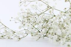 Achtergrond van tak de kleine mooie witte bloemen royalty-vrije stock foto's