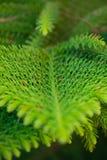 Achtergrond van takken van een levendige pluizige Kerstboom stock afbeelding