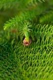 Achtergrond van takken van een levendige pluizige Kerstboom royalty-vrije stock fotografie
