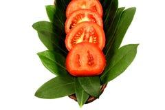 Achtergrond van tomaten Royalty-vrije Stock Fotografie
