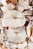Achtergrond van van verschillende types van overzeese shells Stock Foto