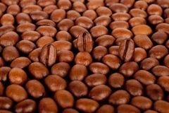 Achtergrond van vele koffiebonen royalty-vrije stock foto's