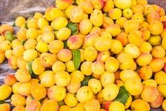 Achtergrond van vele rijpe abrikozen royalty-vrije stock afbeeldingen