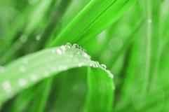 Achtergrond van vers groen gras Royalty-vrije Stock Foto's