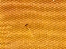 Achtergrond van verse honing in kam Stock Afbeelding