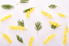 Achtergrond van verse mimosa royalty-vrije stock fotografie