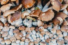 Achtergrond van verzamelde paddestoelenboleet in stapel royalty-vrije stock foto