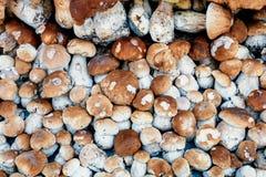 Achtergrond van verzamelde paddestoelenboleet in stapel stock foto