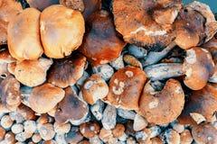 Achtergrond van verzamelde paddestoelenboleet in stapel Stock Foto's