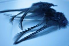Achtergrond van vogelveren op een lichte achtergrond stock afbeeldingen